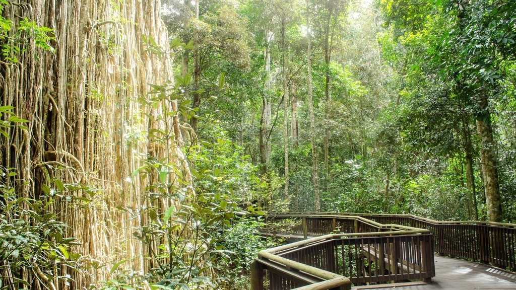 Day trips from Cairns - Curtain Fig Tree