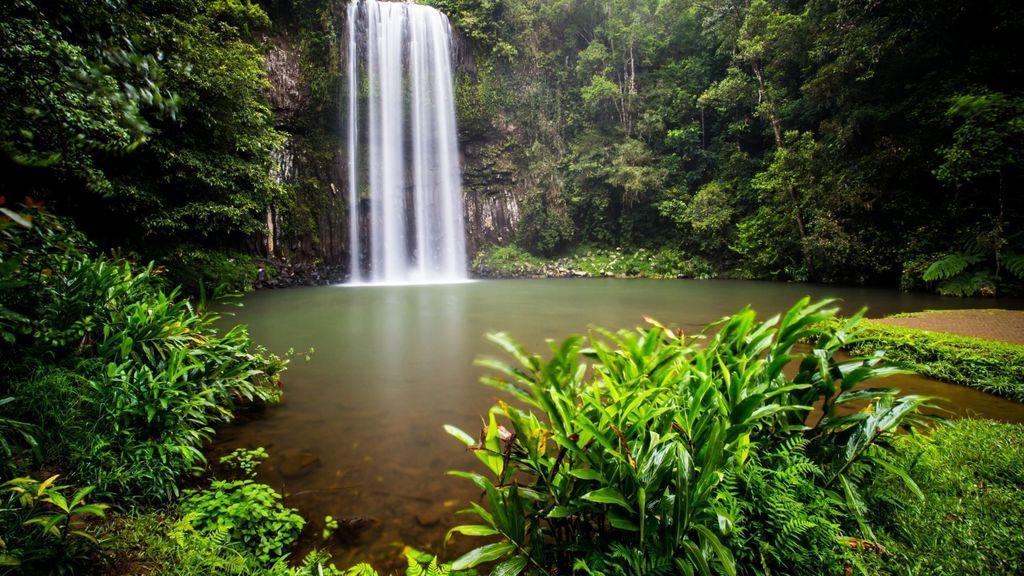 Day Trips from Cairns - Millaa Millaa Waterfalls Circuit
