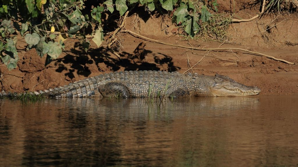 Day Trips from Cairns - Daintree Crocodile Tour