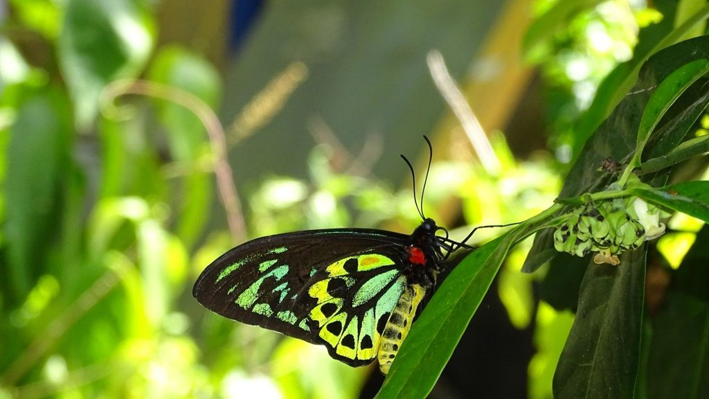 Day Trips from Cairns - Australian Butterfly Sanctuary