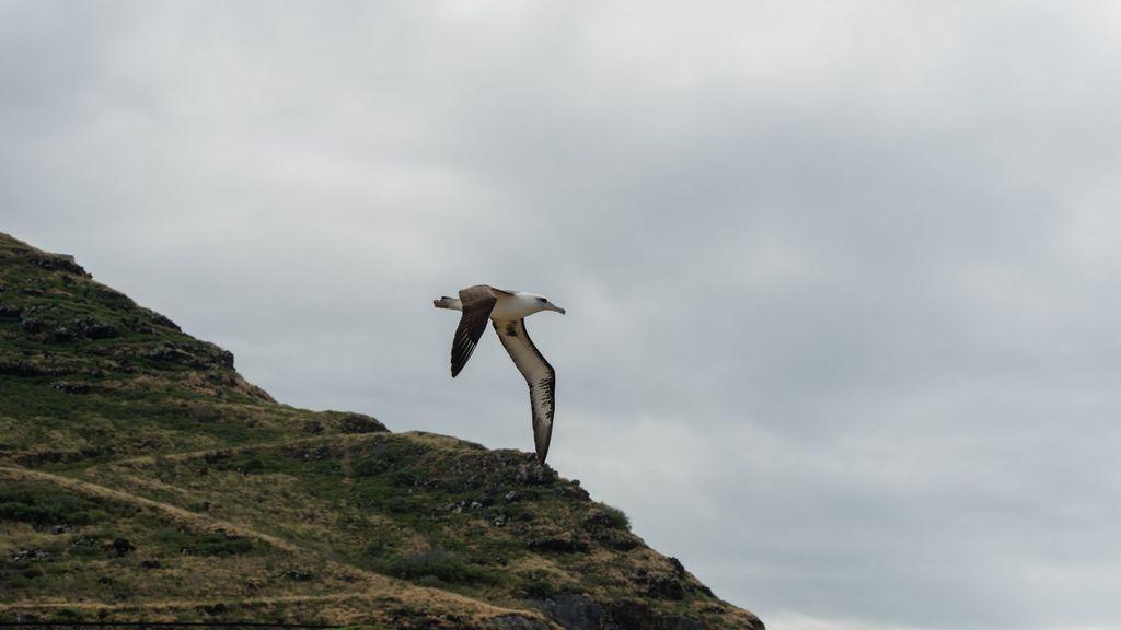 Kaena Point Albatross Sanctuary