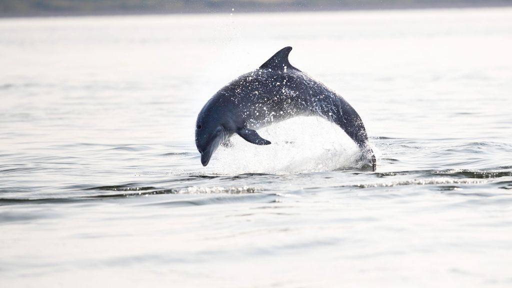 Look for dolphins and whales in Waianae Region